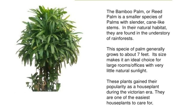%e5%8f%91best-plants-for-improving-indoor-air-quality-4-728